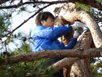 樹木の剪定・伐採