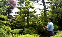 庭木の消毒(毛虫駆除など)